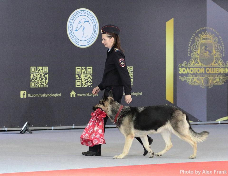 Золотой ошейник 2017 выставка собак