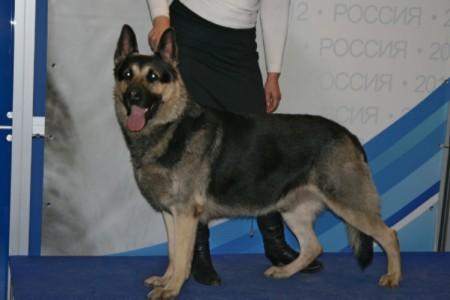 Валентлайф на РОССИИ 2012